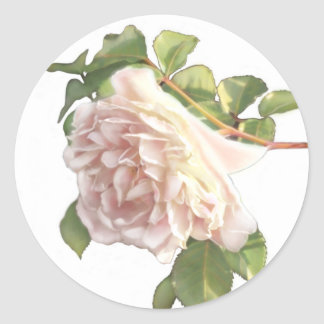 Dusty Ivory  Roses Classic Round Sticker
