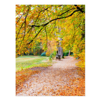 Dutch autumn landscape with footpath and tree postcard
