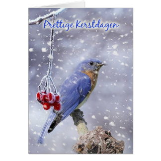 dutch christmas card - blue bird with berries and