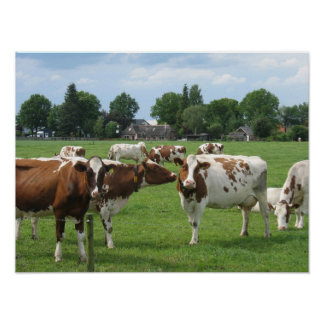 Dutch Dairy Cows Landscape Poster Gift Print