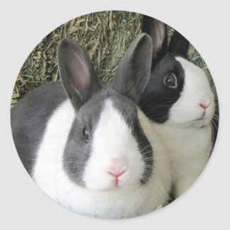 dutch rabbits sticker