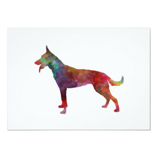 Dutch Shepherd Dog in watercolor Card
