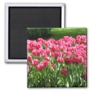 Dutch Tulips Magnet