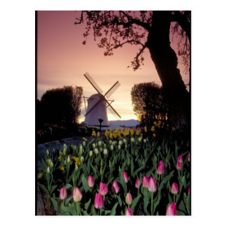 Dutch windmill & flowerbeds postcard