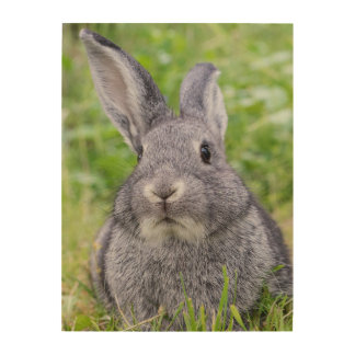 Dwarf bunny rabbit wood wall decor