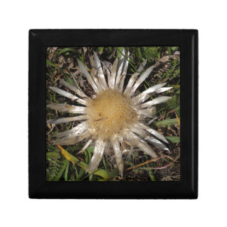 Dwarf Carline Thistle Jewelry Boxes
