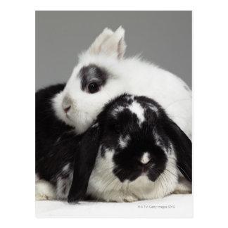 Dwarf-eared rabbit leaning over lop-eared postcard