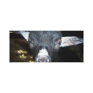 """Dwarf Goat Canvas Print """"Midnight Moon"""""""