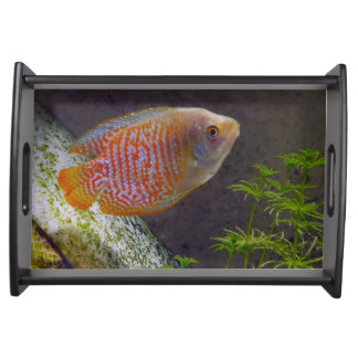 Dwarf Gourami Fish Serving Tray