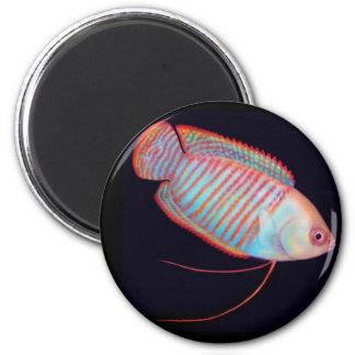 Dwarf Gourami Tropical Fish Magnet