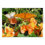 Dyas Julia and White Peacock Butterflies Greeting Cards