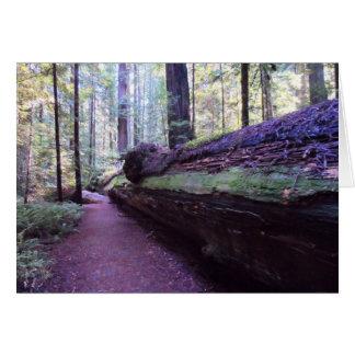 Dyerville Giant- Humboldt Redwoods State Park Greeting Card