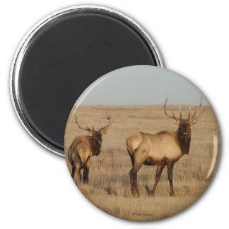 E0001 Bull Elk 2 Inch Round Magnet