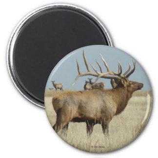 E0004 Bull Elk Magnet