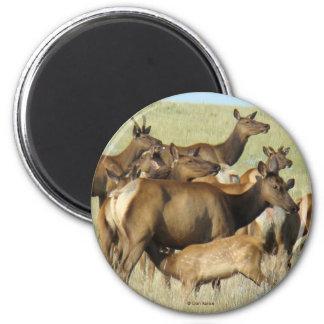 E0007 Cow Elk 2 Inch Round Magnet