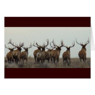 E0017 Bull Elk Card