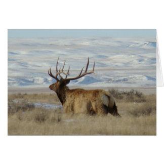 E0022 Bull Elk in Snow Card