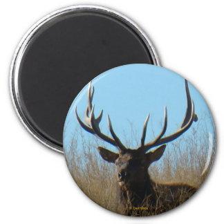 E0026 Bull Elk magnet