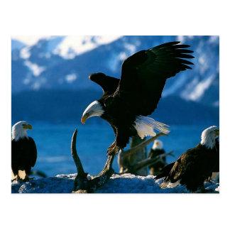 Eagle 19 postcard