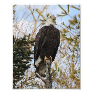 Eagle 2 photo