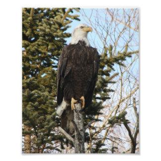 Eagle 3 photo print