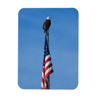Eagle and American Flag - Magnet