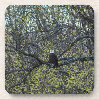 Eagle Awareness Coaster