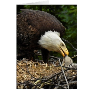 Eagle Feeding time Card