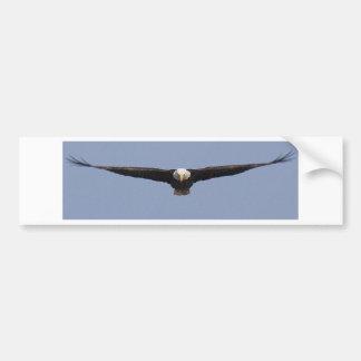 Eagle head-on color bumper sticker