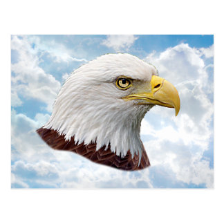 Eagle Head - Post Card