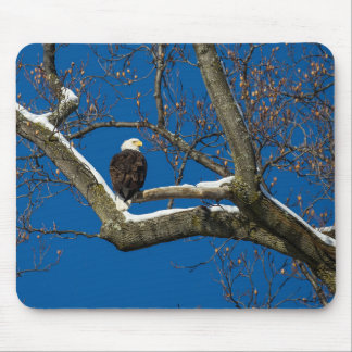 Eagle in a  Snowy Tree Mouse Pad
