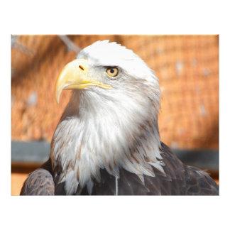 Eagle In God we trust Letterhead