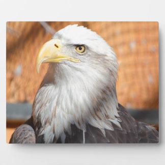 Eagle In God we trust Plaque