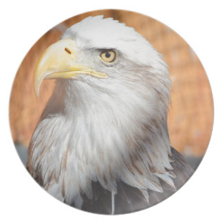 Eagle In God we trust Plate