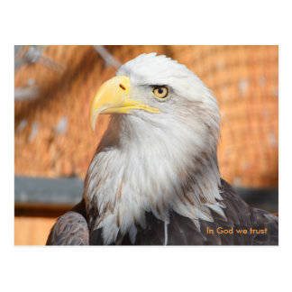 Eagle In God we trust Postcard