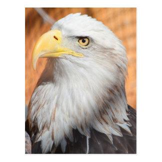 Eagle In God we trust Postcard