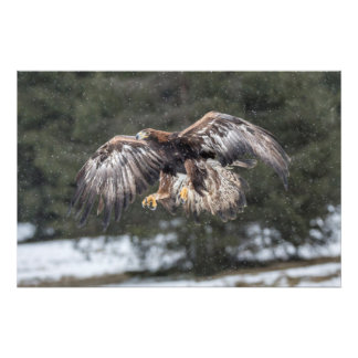 Eagle in Snow Photo Print