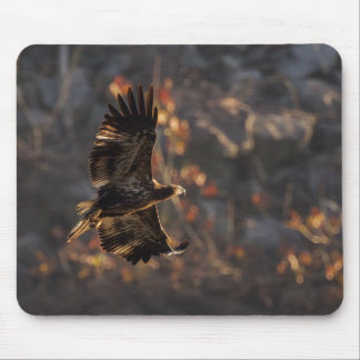 Eagle In the Golden Hour Mouse Pad
