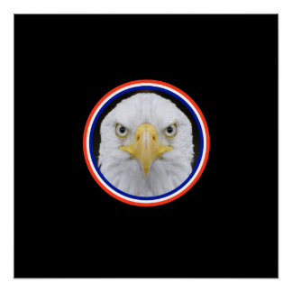 Eagle Looking At You Poster