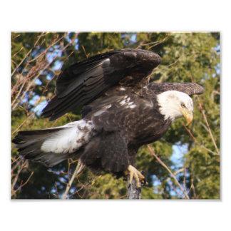 Eagle One Art Photo