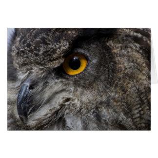 Eagle Owl Eyes Card