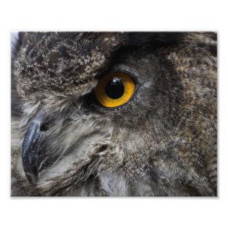 Eagle Owl Eyes Photo Print