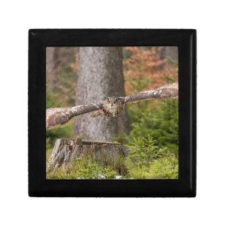 Eagle Owl in Flight Gift Box