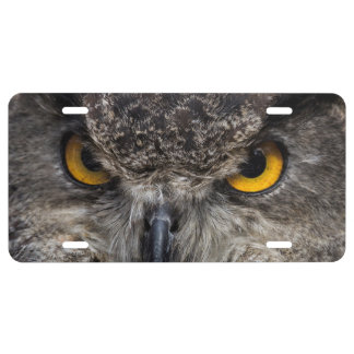 Eagle Owl License Plate