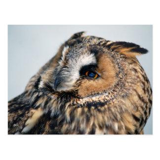 Eagle Owl Postcard