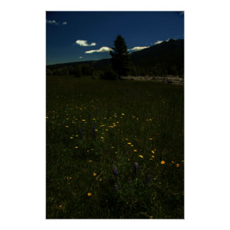 Eagle Park Wildflowers Poster
