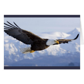 Eagle Soaring greeting card