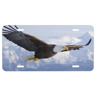 Eagle Soaring license tag License Plate