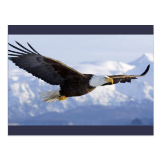 Eagle Soaring postcard