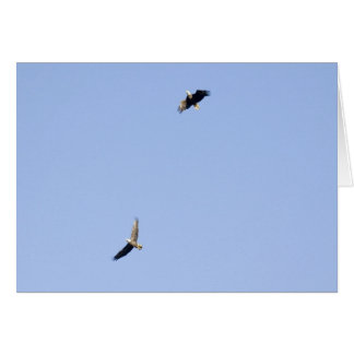 Eagles at Conowingo Dam Card